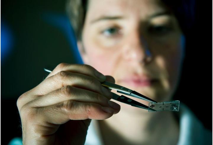 Eine Wissenschaftlerin hält eine Glasplatte mit einer Pinzette vor sich und begutachtet diese.